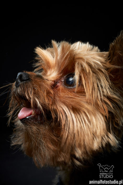 fotografia psów warszawa